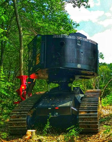 Tree Services | New Milford, CT | Advanced Construction Tree Service